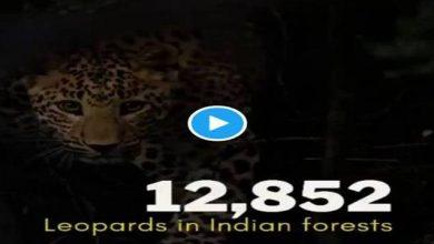 Photo of बाघ, शेर और तेंदुए की बढ़ती संख्या इस बात का प्रमाण है कि भारत वन्य जीवों के लिए एक बेहतरीन जगह है: प्रकाश जावडेकर