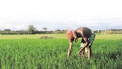 Photo of प्रदेश सरकार द्वारा किसानों को गुणवत्तायुक्त बीज, खाद, कृषि रक्षा रसायन उपलब्ध कराने से फसलोत्पादन में हुई बढ़ोत्तरी
