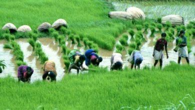 Photo of प्रदेश सरकार ने कोरोना काल में भी किसान हितों का रखा ख्याल