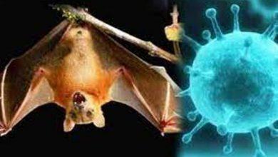 Photo of केरल के कोझीकोड जिले में निपाह वायरस का मामला सामने आया