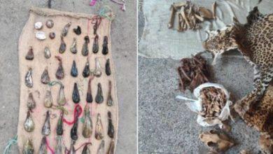 Photo of Wildlife Crime Control Bureau Busts Wildlife Trafficking Syndicates in Jammu & Kashmir; Huge quantity of Wildlife contrabands seized
